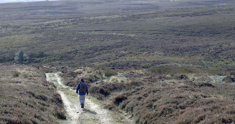 Image shows a person walking in the North York Moors
